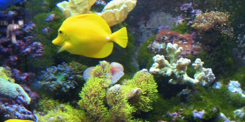 Tropical exotic fishes underwater on the bottom